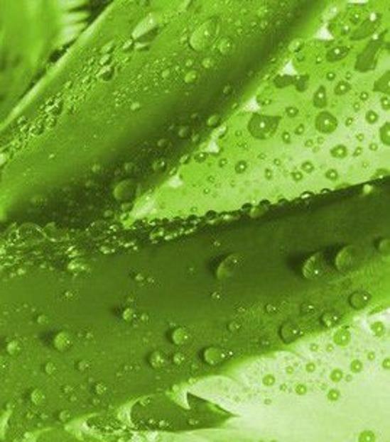 ZSK Wyciąg z aloesu koncentrat zatężony 10-krotnie, 30 ml